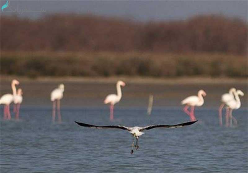 آدرس دریاچه مهارلو