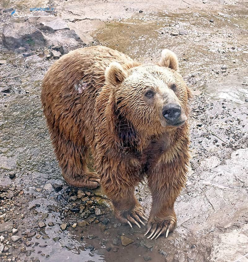 باغ وحش ایروان از جاهای دیدنی ارمنستان