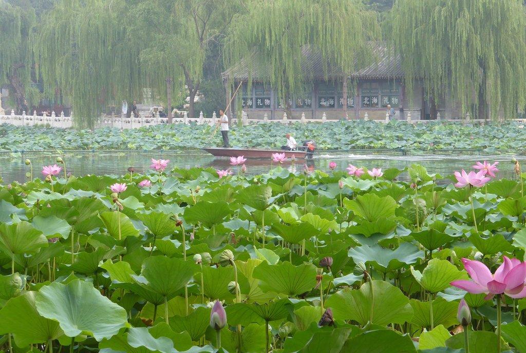پارک بیهان در تور چین