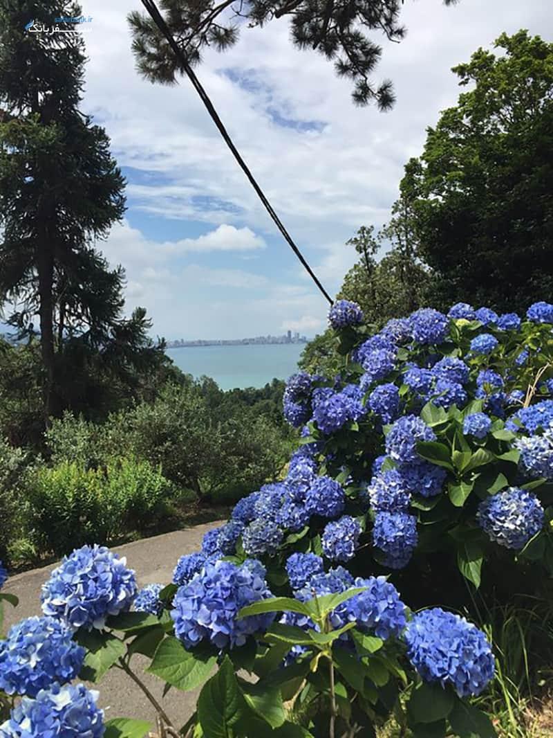 باغ گیاه شناسی باتومی