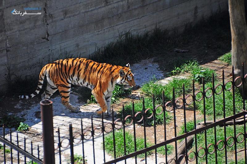 حیوانات باغ وحش تفلیس