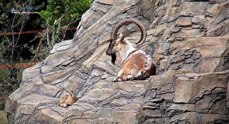 باغ وحش تفلیس گرجستان