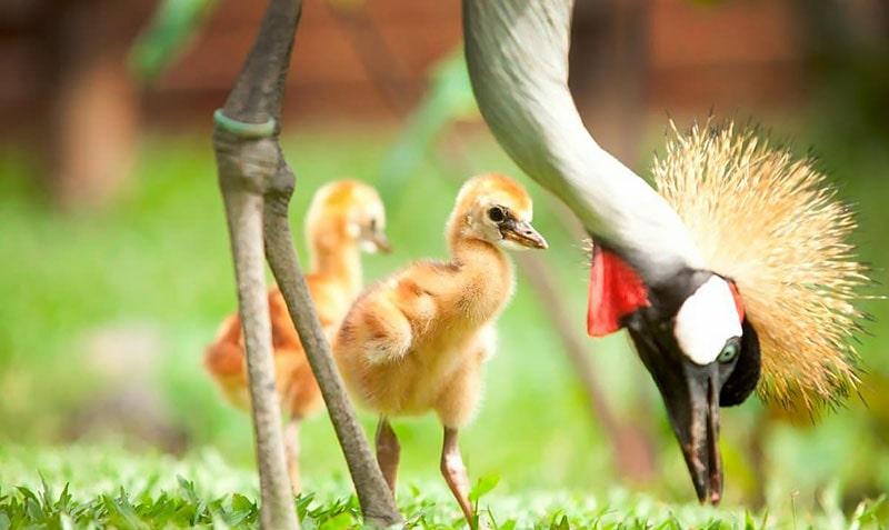 پارک پرندگان و خزندگان بالی