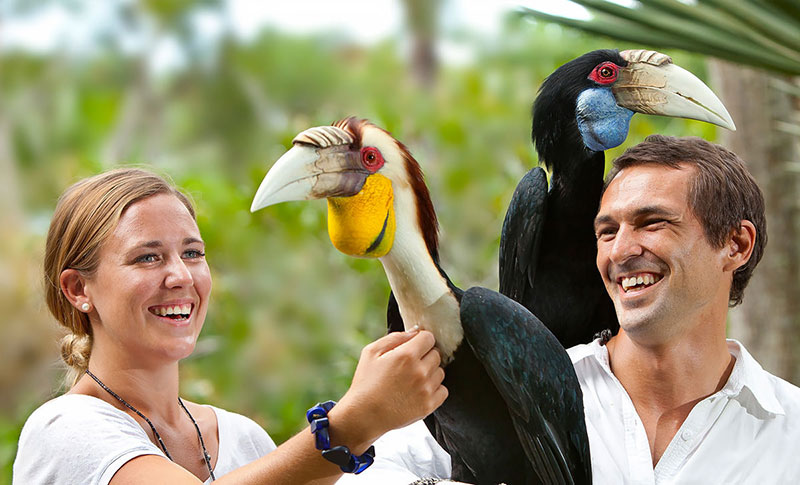 پارک پرندگان بالی در جزیره بالی اندونزی