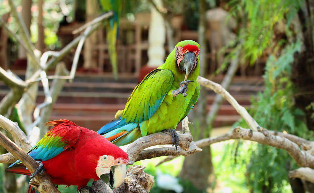باغ پرندگان از جاذبه های گردشگری بالی