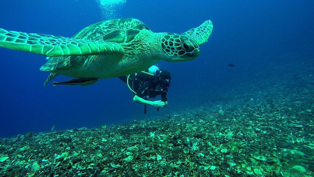تفریحات آبی جزای گیلی در بالی