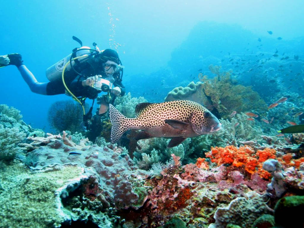 غواصی در نوسا لمبونگان بالی