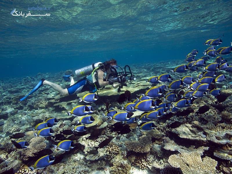 غواصی در دریای ماله از تفریحات مالدیو