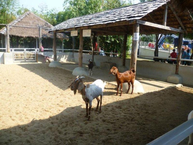 مزرعه حیوانات در شهربازی دریم لند بانکوک تایلند