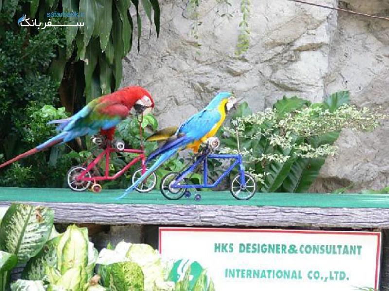 باغ وحش کائو کویی در پاتایا