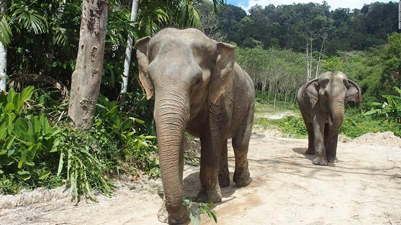 گرین الفنت سنکچری پارک تایلند، مأمن و پناهگاهی برای فیل ها