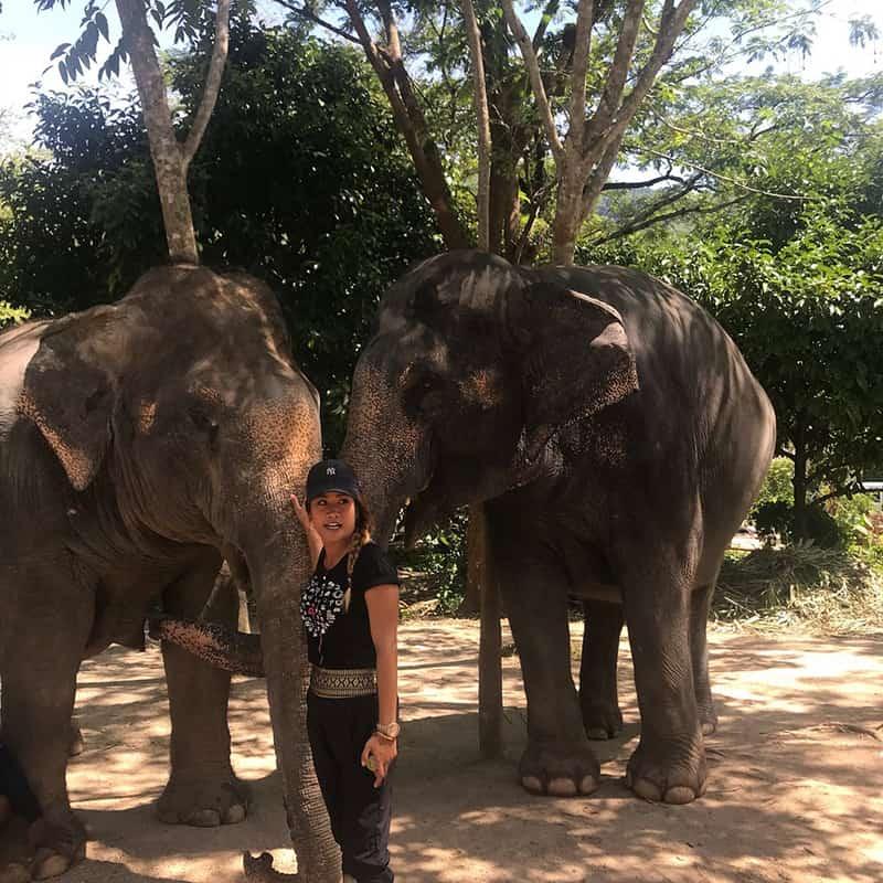 حفاظت از فیل ها
