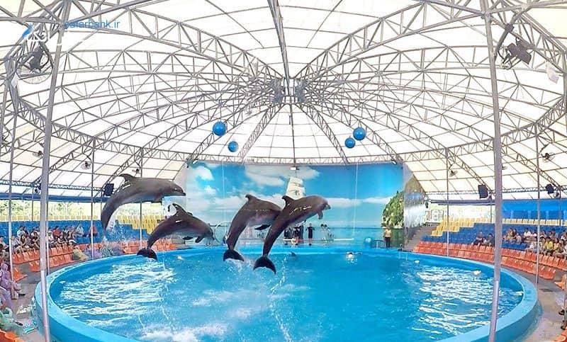 دلفینز بی پوکت