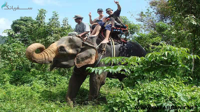 فیل سواری در جنگل های پوکت