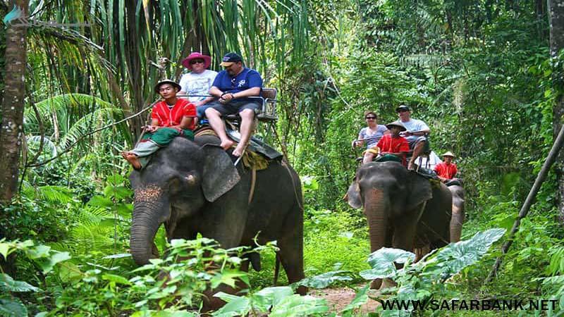 فیل سواری در پوکت