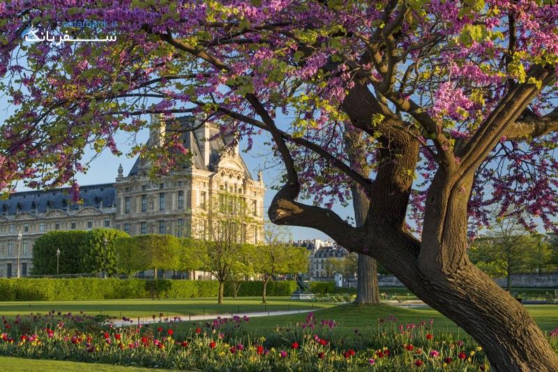 در بخش جلویی موزه لوور Tuileries باغ زیبای