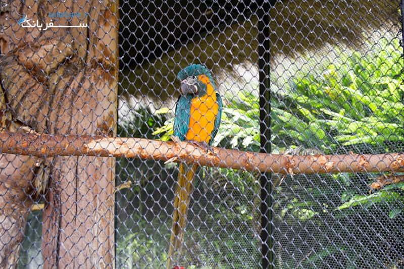 باغ وحش جزایر قناری