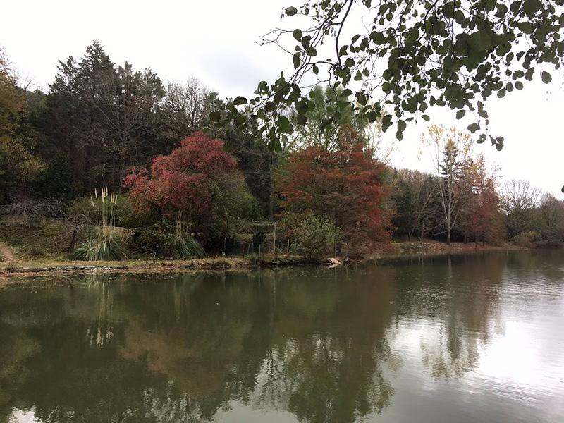 دریاچه جنگل بلگراد استانبول