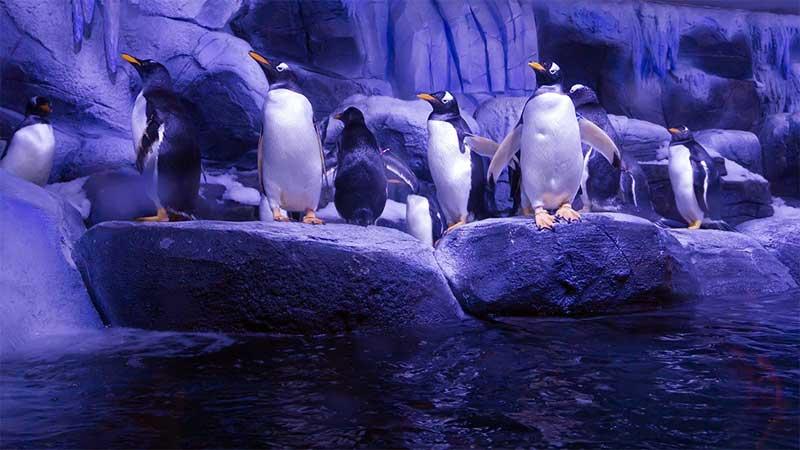 پنگوئن ها در آکواریوم استانبول