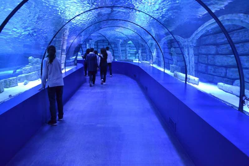 تونل دیدنی آکواریوم فلوریای استانبول ترکیه