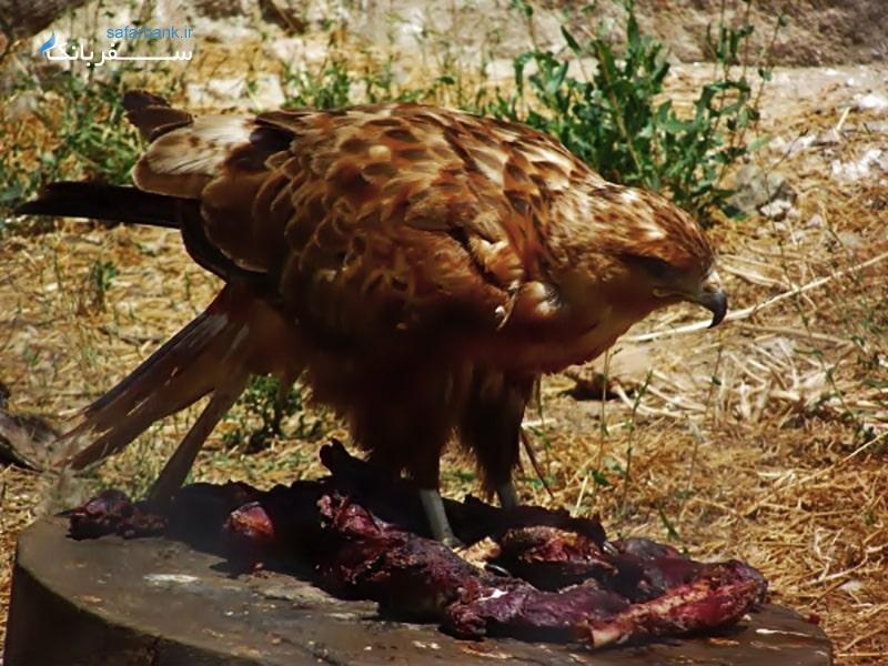 باغ وحش ازمیر از جاذبه های گردشگری ازمیر ترکیه