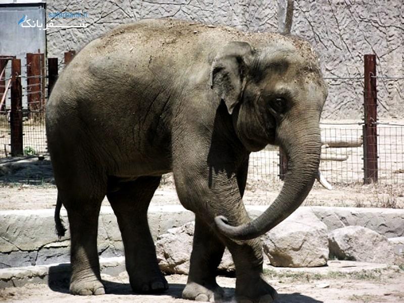 باغ وحش بزرگ ازمیر از جاهای دیدنی ازمیر ترکیه