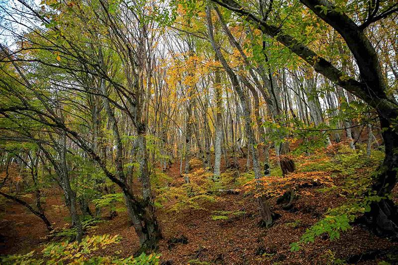پارک ملی تفلیس طبیعتی زیبا در دامنه کوه ساگوراما