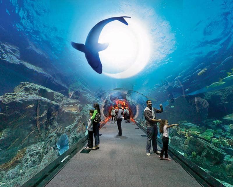 باغ وحش زیر آب و آکواریوم دبی