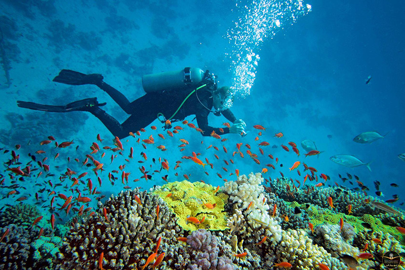 لذت غواصی در جزیره ماله