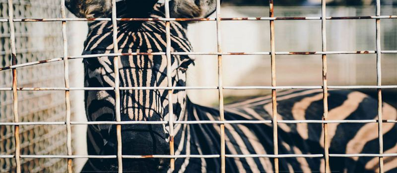 باغ وحش تفلیس نخستین پارک جانورشناسی شهر