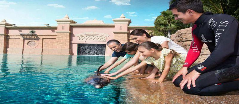 دلفین بی دبی لذت غواصی، شنا و بازی با دلفین ها