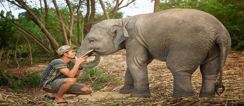 دهکده فیلهای پاتایا پناهگاهی جنگلی برای فیل ها