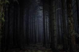 جنگل جیغ کجاست