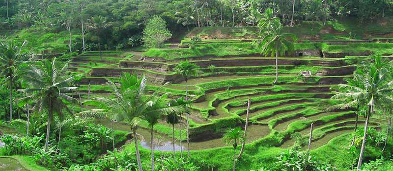 راهنمای خرید تور بالی