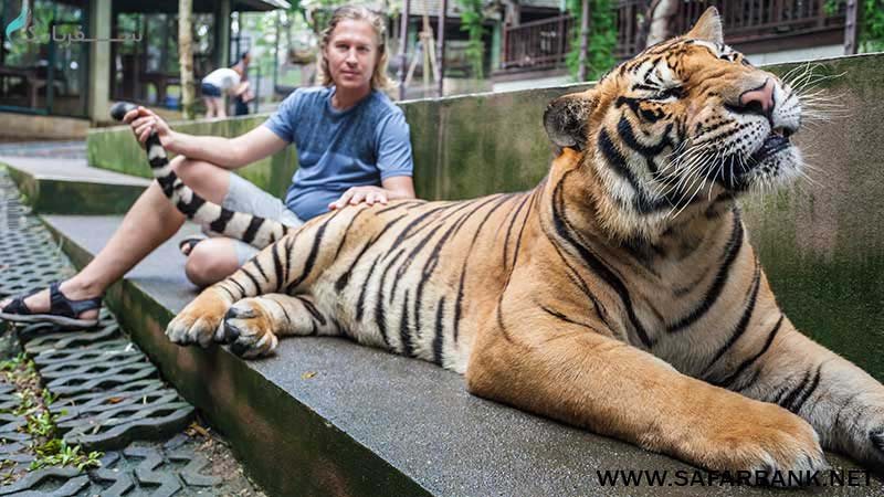 باغ وحش چیانگ مای در تایلند
