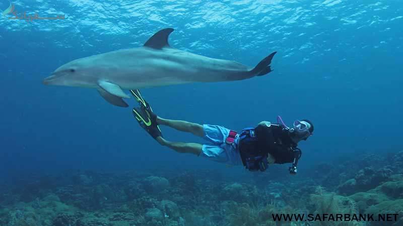 غواصی با دلفینها